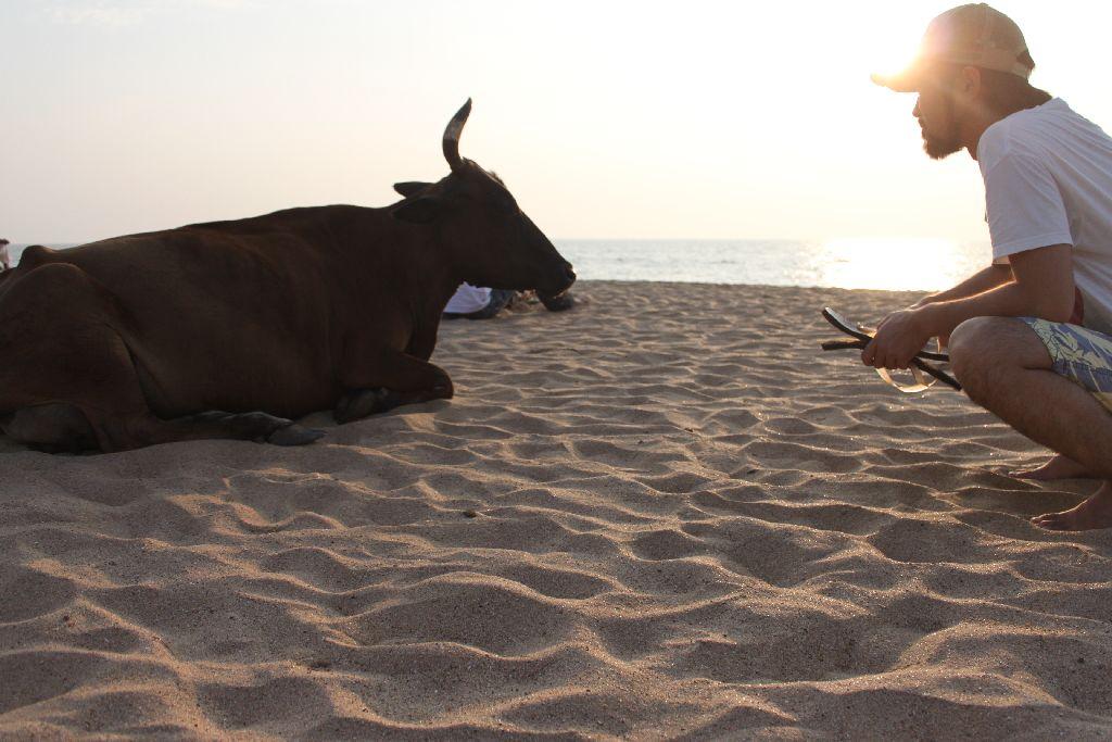 謹賀新年牛がいない