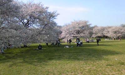 桜と自意識