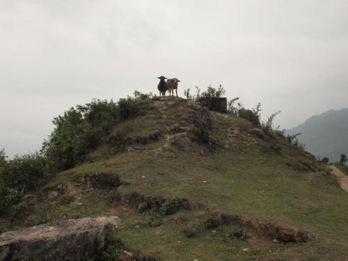 ふと見ると丘の上に牛が。やはり僕は牛が好きだ。