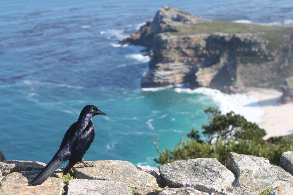 南アフリカ・ケープタウン10日間の旅、いかがでしょう?
