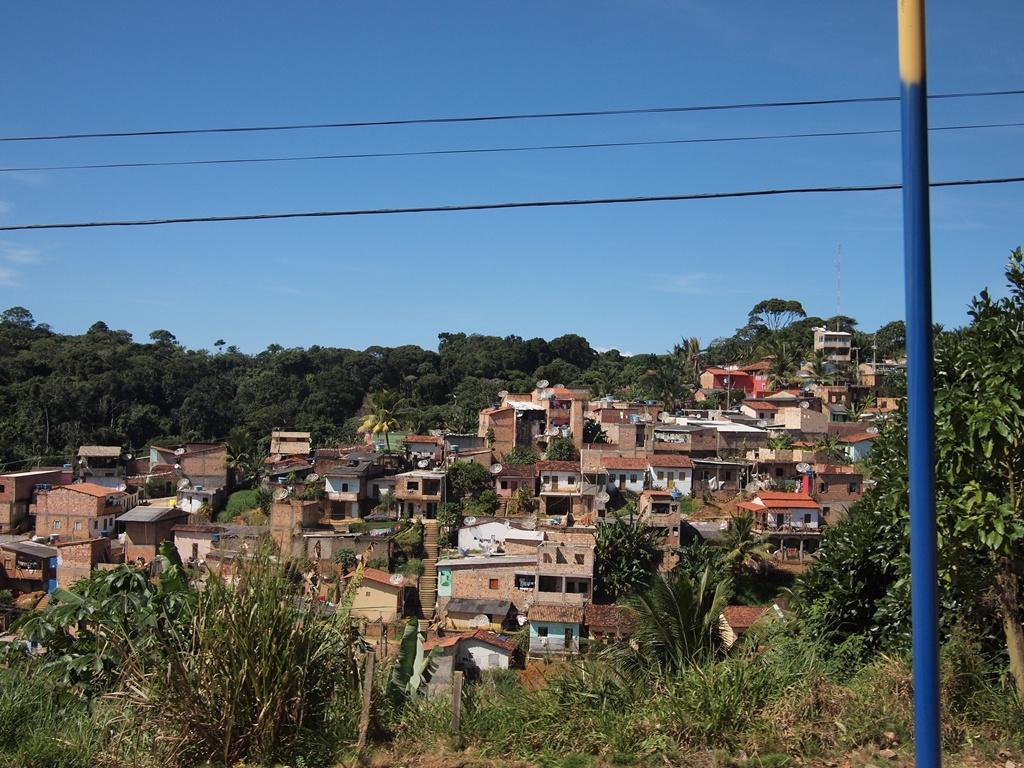 ブラジル小話2 「餌と愛の話」