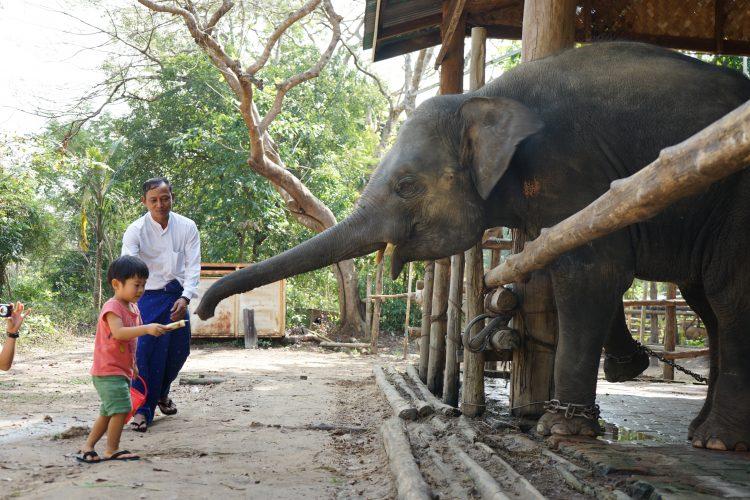 hlawga_park_elephant
